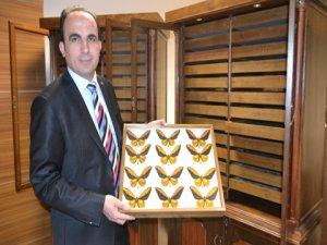 Türkiye dünyaya kelebek ihraç edecek