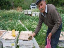 Şaşırtan arı ölümleri