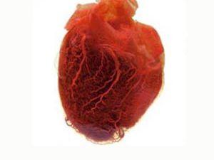İşte kalbin en büyük düşmanı!