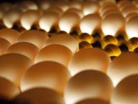 Çocuklara günde bir yumurta