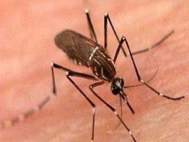 Türk bilimci çeçe sineğinin sırrını çözdü