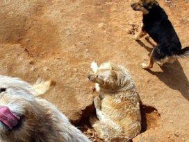 Kuveyt sokak köpeklerini sınır dışı edecek