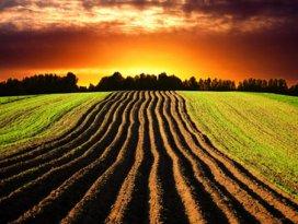 Türkiye Sudanda tarım arazisi kiraladı
