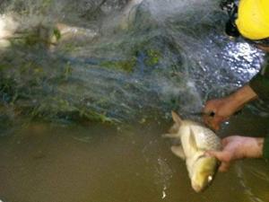 Balıklar ağdan kurtarıldı