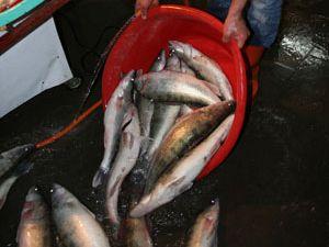 Tüketici balığa yöneldi
