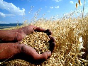 Çiftçiler tarım sigortasını sevdi