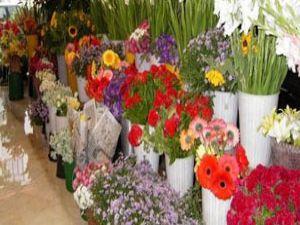 En fazla çiçek Almanyaya!