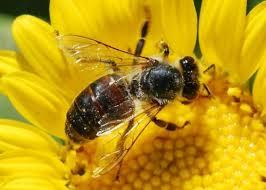 Arıların saldırısına uğradılar