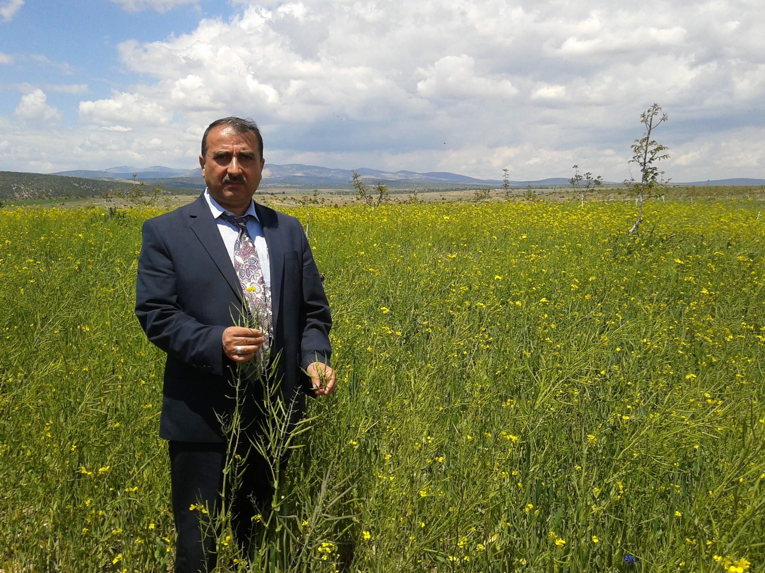 Beyşehirde yem bitkileri üretimi artırıyor