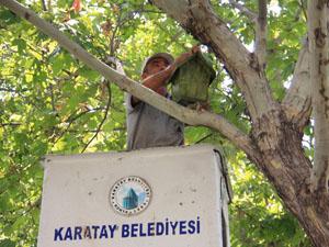 Karatay parklara kuş evleri yerleştiriyor