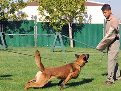 Köşkü üstün yetenekli köpekler koruyacak