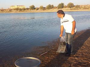 Cihanbeyli Göleti'ne 16 bin balık bırakıldı