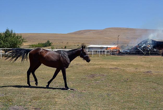 Şampiyon atların çiftliğinde yangın