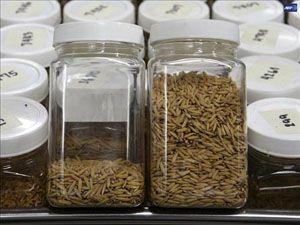 Türkiye nin ilk tohum gen bankası