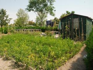 Karataydaki hobi bahçeleri yeni yerine taşınıyor