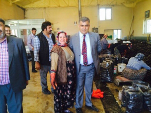 Başkan Özgüven'den siyah havuç işçilerine ziyaret