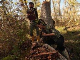 Ormanların geleceği için böcekler inceleniyor