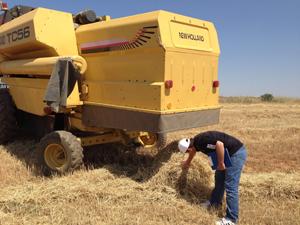 Artan kontroller, çiftçiyi dane kaybından kurtardı