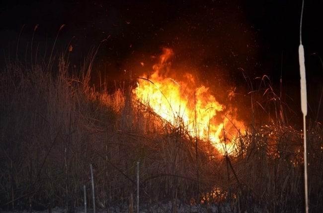 Beyşehir Gölü Milli Parkında yangın paniği