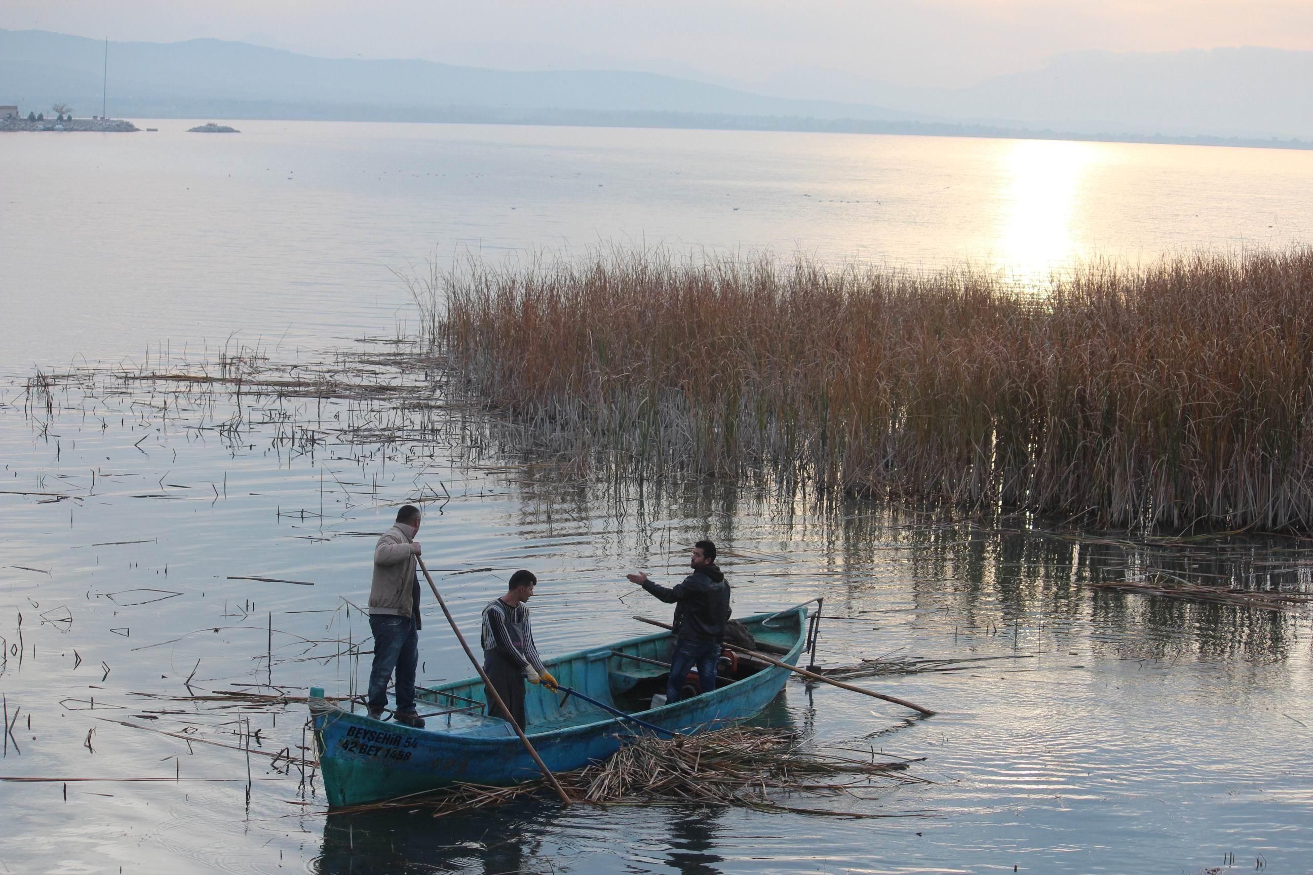 Beyşehir gölü kıyılarındaki sazlıklar temizleniyor