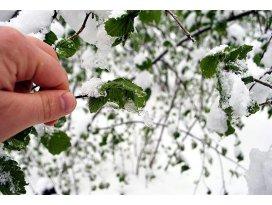 Meteorolojiden zirai don uyarısı