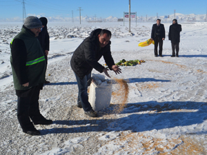 Konya'da yaban hayvanları için yem bırakıldı