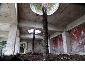 Ladin ağaçlarına Karadeniz usulü koruma