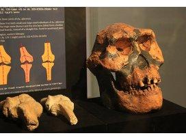 Etiyopyada 3,2 milyon yıllık insansı fosili: Lucy