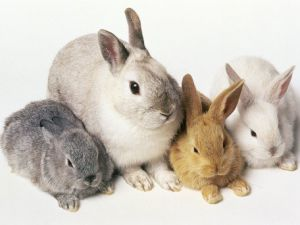 Yarım milyon dolarlık villada 500 tavşanla yaşıyorlardı