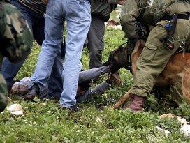 İsrailli askerlerden köpekli işkence