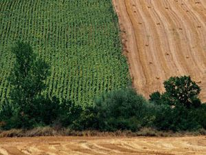 Konyada çiftçiye arazi dağıtılacak