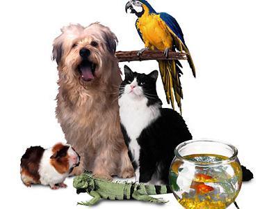 Öğrencilerin büyük tutkusu: Evcil hayvanlar