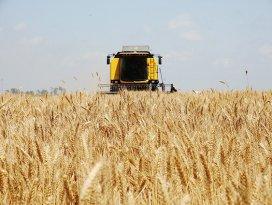 Buğdayda TMOnun taban fiyatı bekleniyor