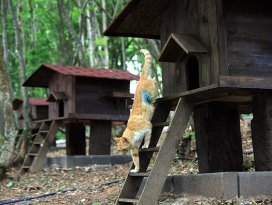 Sokak kedileri için 5 yıldızlı Kedi Kasabası