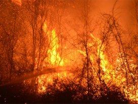 İzmirdeki orman yangınında PKK şüphesi