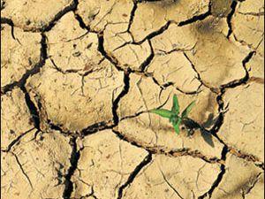 İklim değişikliğinin Altınekin tarımına etkisi