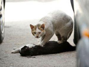Sokak kedisinden insanlık dersi!
