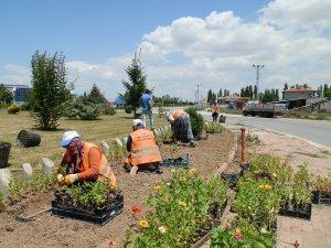 Beyşehir'de 100 bin çiçek toprakla buluştu