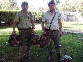Konya'da canlı keklik satışına suçüstü yapıldı