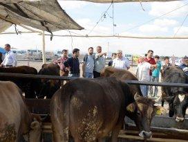 Meram'da kurbanlık satışları başladı