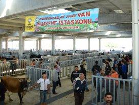 Büyükşehir Belediyesi Kurban Bayramı'na hazır