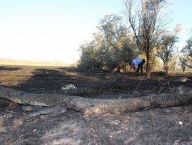 Çölleşme ve Erozyon Araştırma Merkezi sahasında yangın