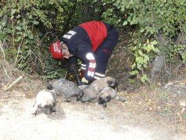 Su borusundaki yavru köpekleri itfaiye kurtardı