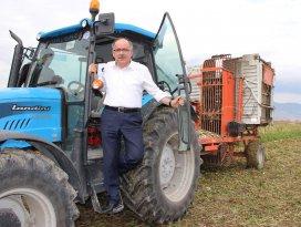 Milletvekili traktör sürdü, pancar hasadı yaptı
