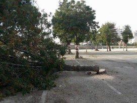 Ereğli'de asırlık ağacı kestiler