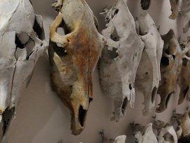 Metro kazısı at fosili koleksiyonu kazandırdı