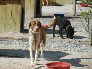 Köpek kavgasında 1 ölü 3 yaralı