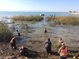 Beyşehir Gölü kıyısında saz kesim seferberliği