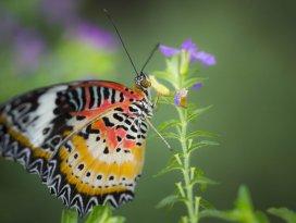 Konya Tropikal Kelebek Bahçesine yoğun ilgi