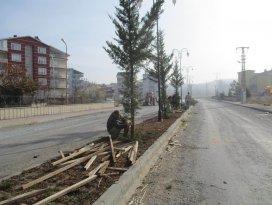 Beyşehir'de yeşillendirme çalışmaları